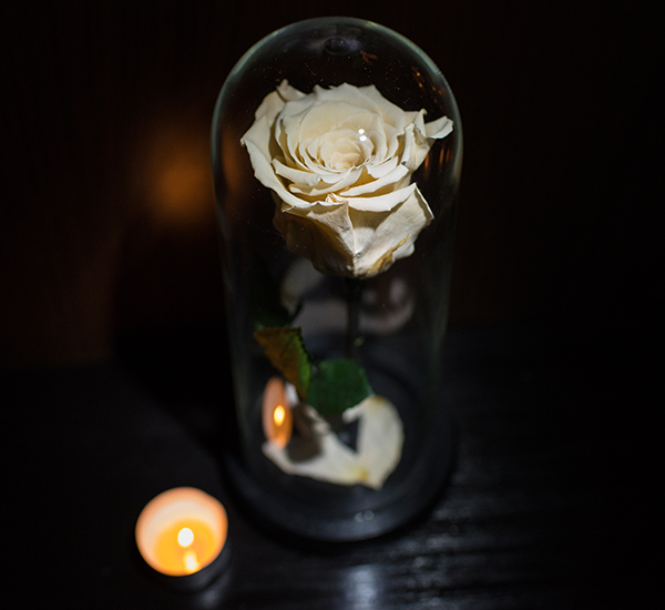 trandafir alb criogenat