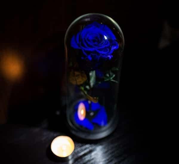 trandafiri criogenati albastrii inchis