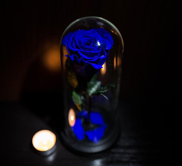 trandatfir criogenat albastru
