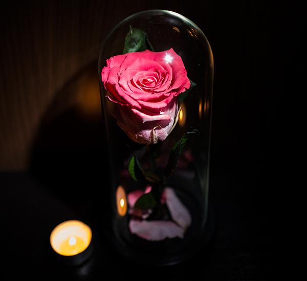Trandafiri roz criogenat in cupola