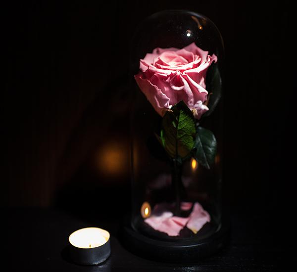 Trandafiri roz criogenat in cupola ieftin
