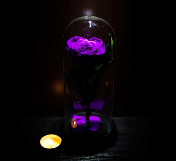 trandafir criogenat mov in cupola