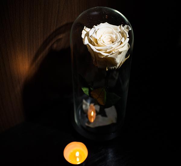 trandafiri criogenati ieftini in cupola