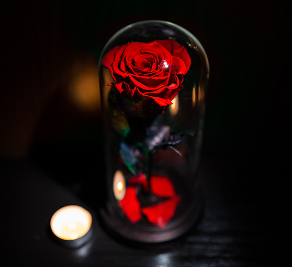 trandafir rosu criogenat