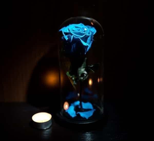 trandafir criogenat blue