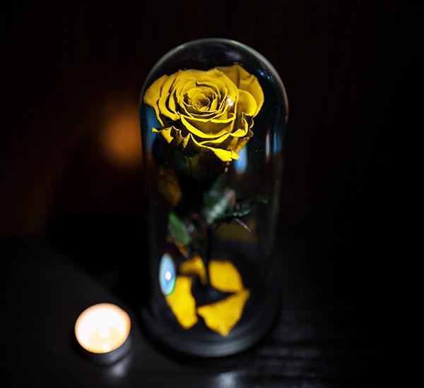 trandafir criogenat galben