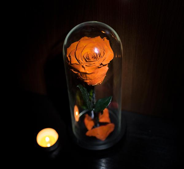 Trandafiri v2 1