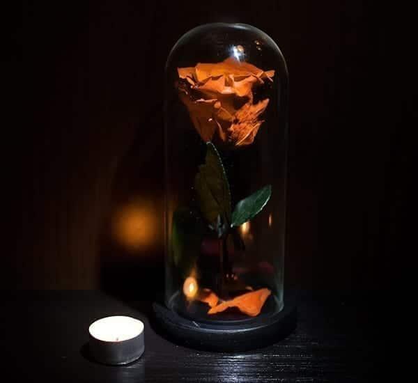Trandafiri v2 4