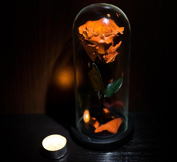 Trandafiri v2 5