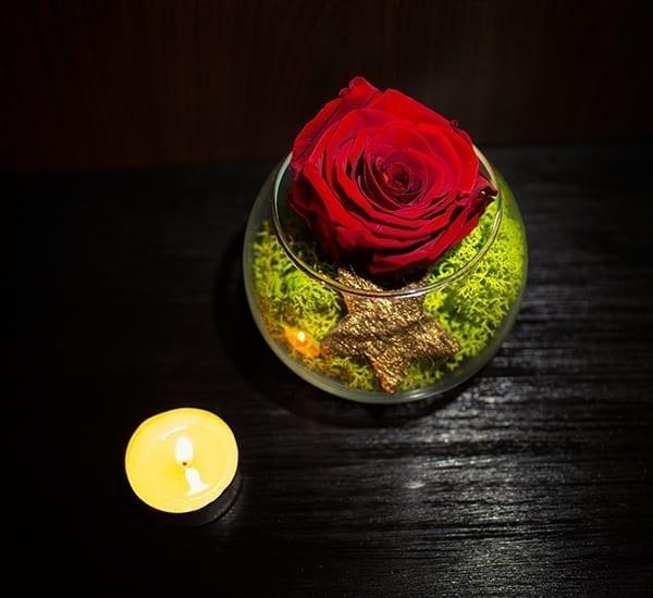 trandafir criogenat mov in bol