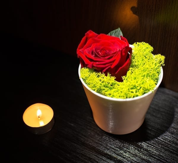 trandafir rosu nemuritor