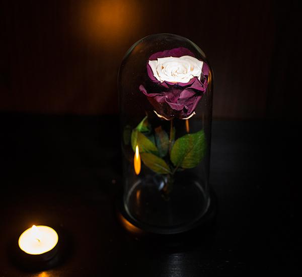 trandafir criogenat ieftin