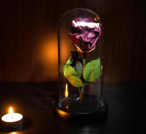 trandafir criogenat vintage