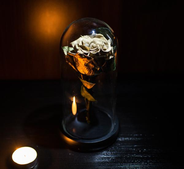 trandafir criogenat gold