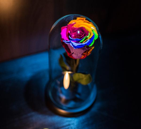 trandafir criogenat culori