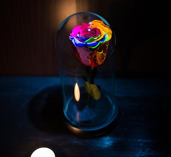 trandafir criogenat rainbow