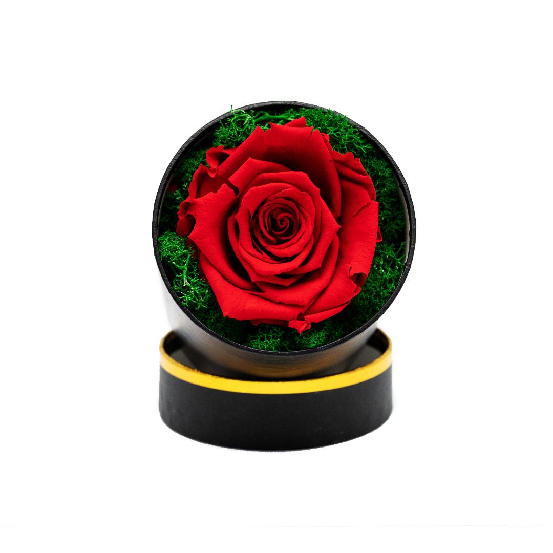 Trandafir Criogenat queen