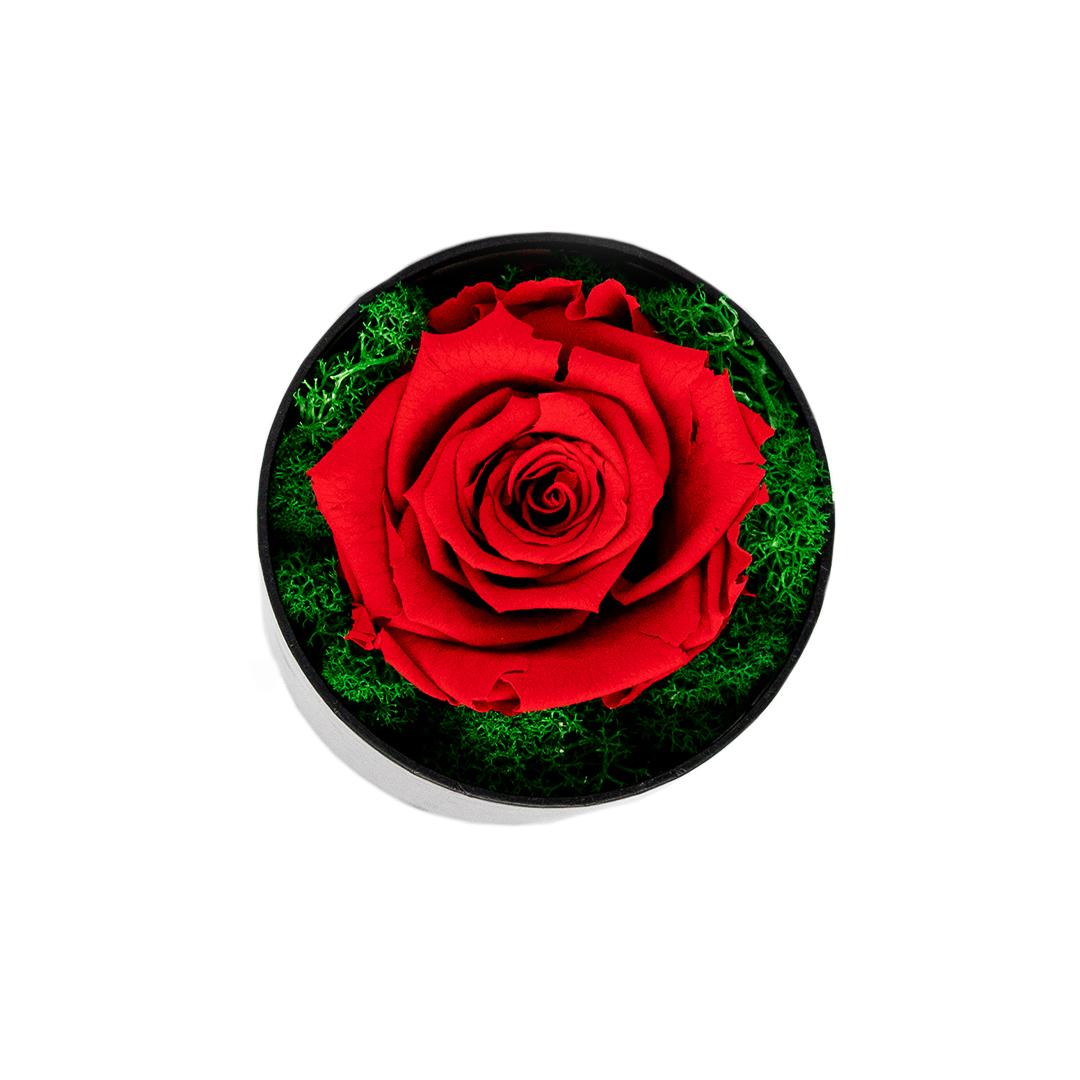 Trandafir Criogenat rosu in cutie