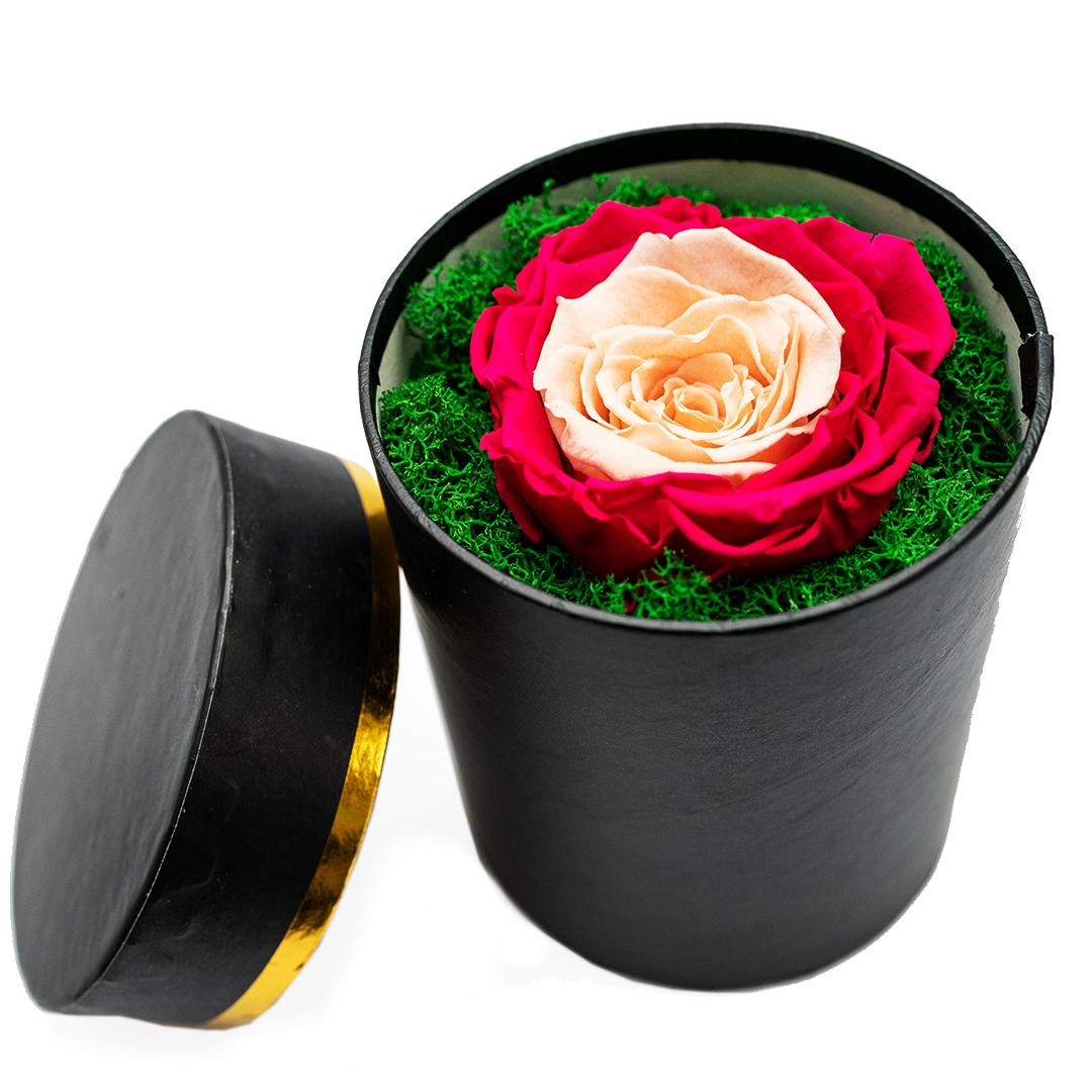 trandafir criogenat duo