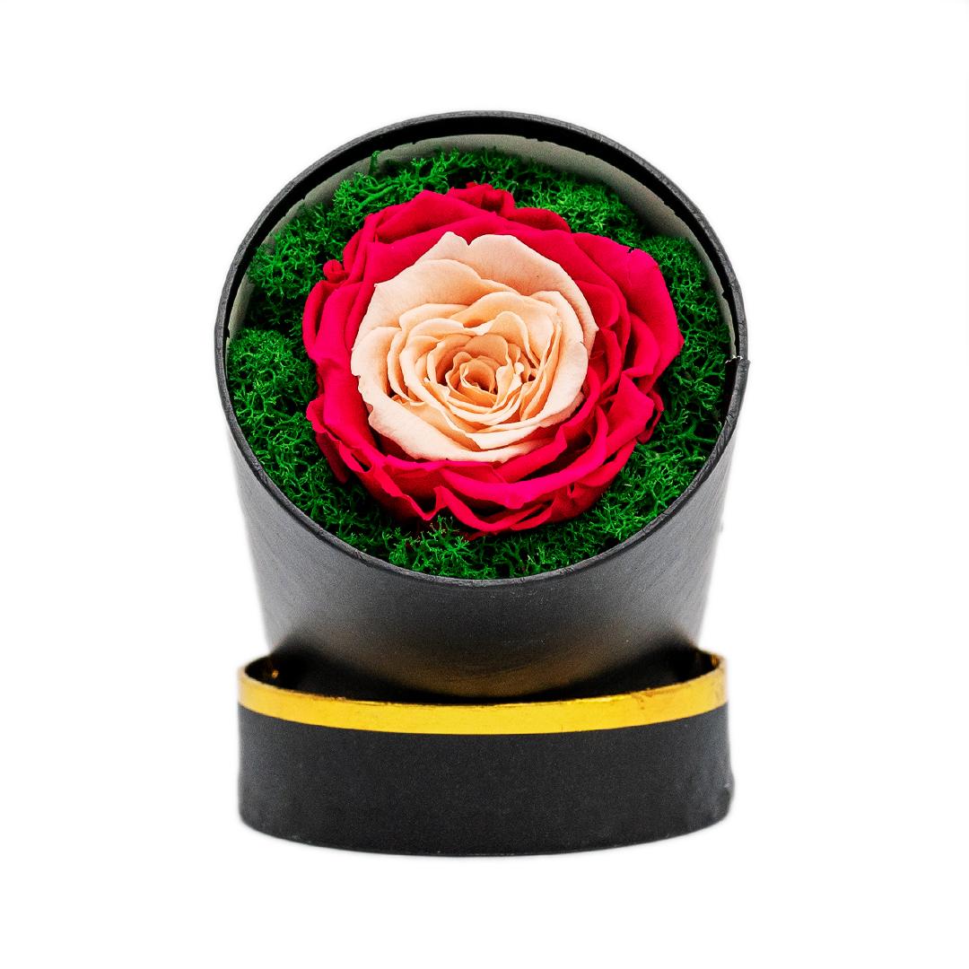 trandafir criogenat doua culori