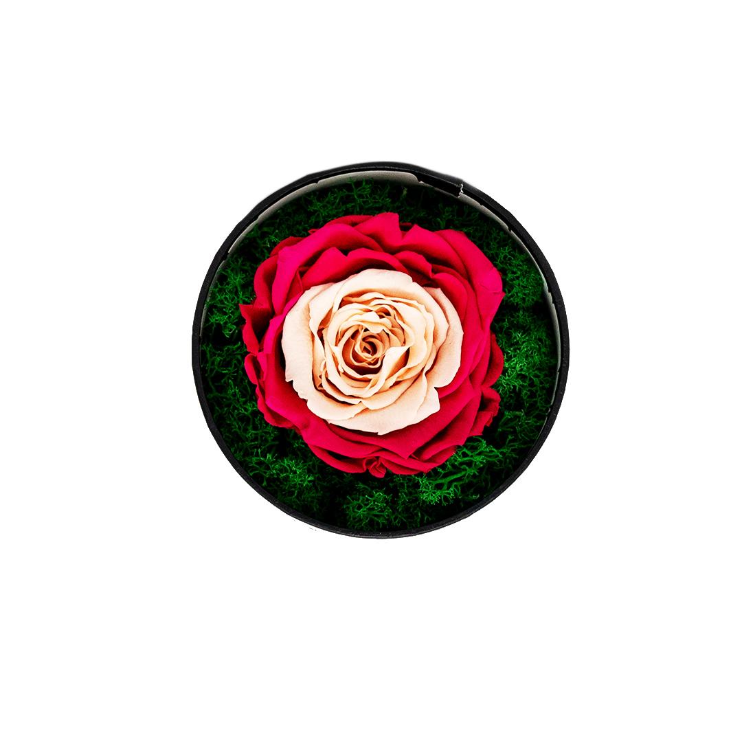 Trandafir criogenat Vintage in cutie