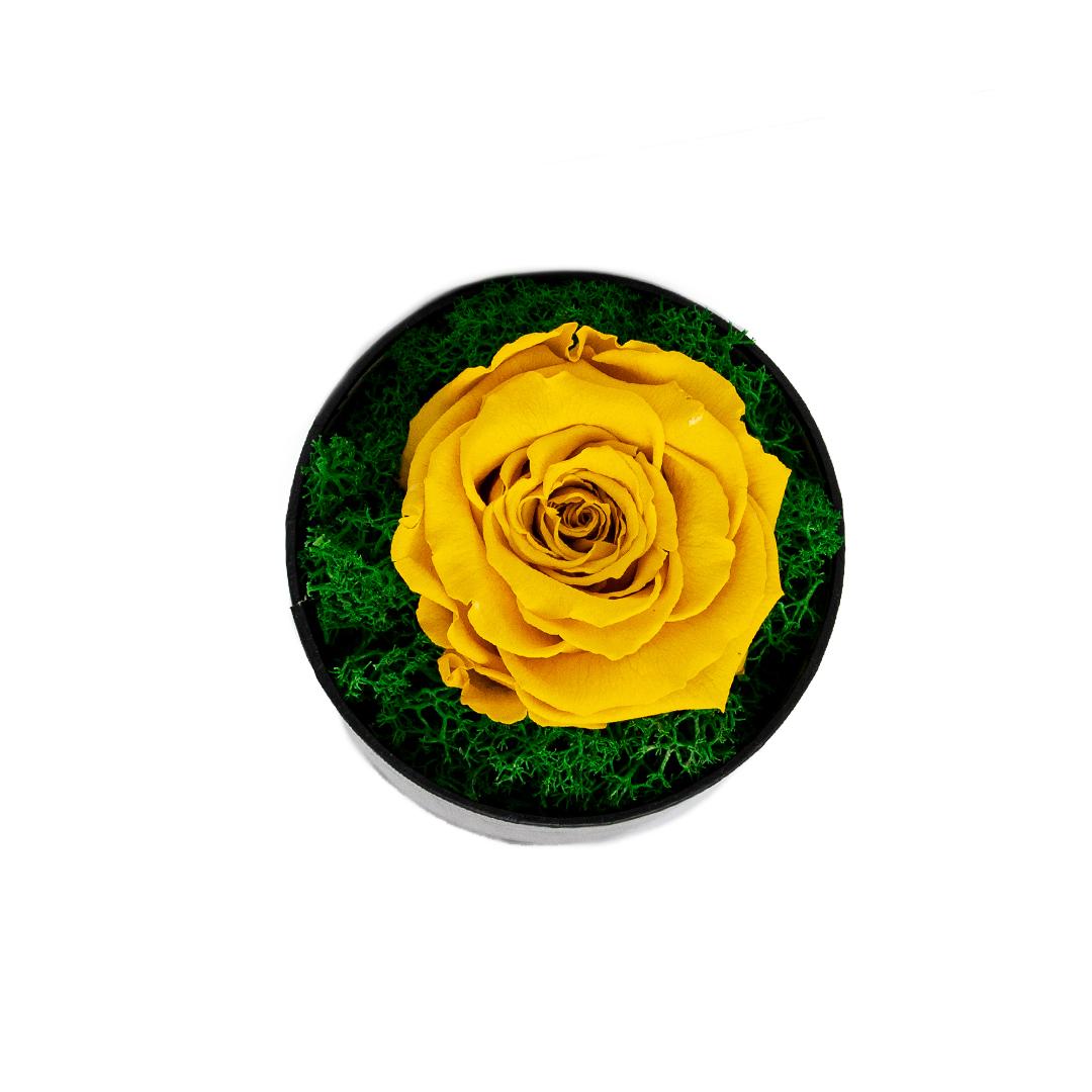 Trandafir criogenat in cutie galben