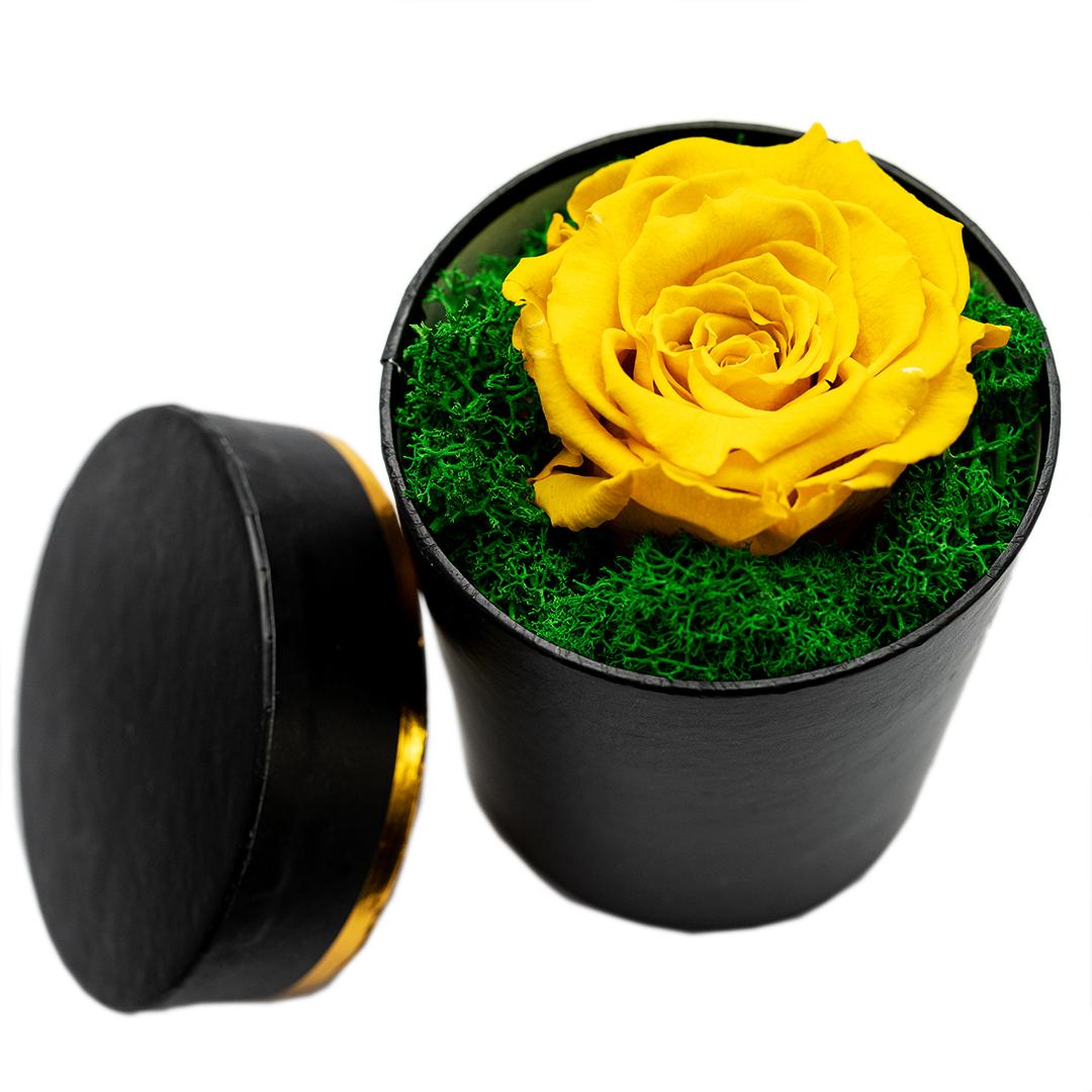 Trandafir criogenat in cutie Ilustru