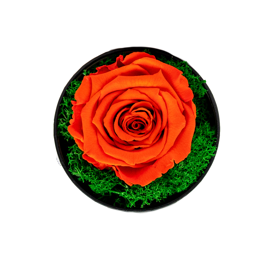 Trandafir Criogenat orange