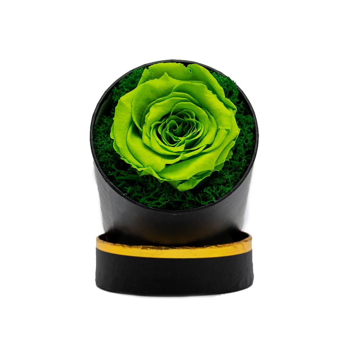 Trandafir Criogent verde deschis